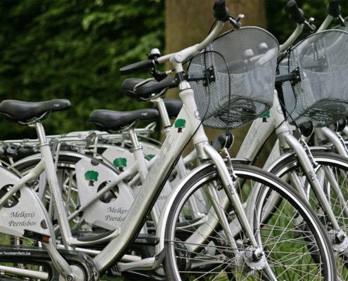 fietsen verhuur - melkerij-peerdsbos